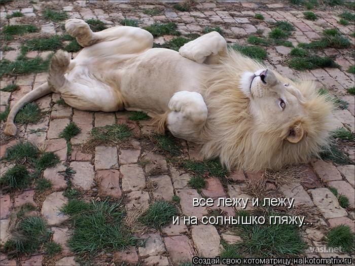 Котоматрица: все лежу и лежу, и на солнышко гляжу...
