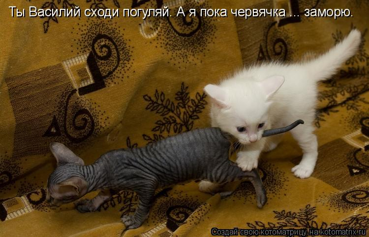 Котоматрица: Ты Василий сходи погуляй. А я пока червячка ... заморю.