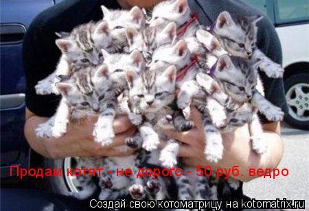 Котоматрица: Продам котят - не дорого - 50 руб. ведро