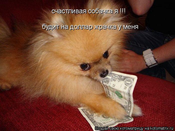 Котоматрица: будит на доллар жрачка у меня счастливая собачка я !!!