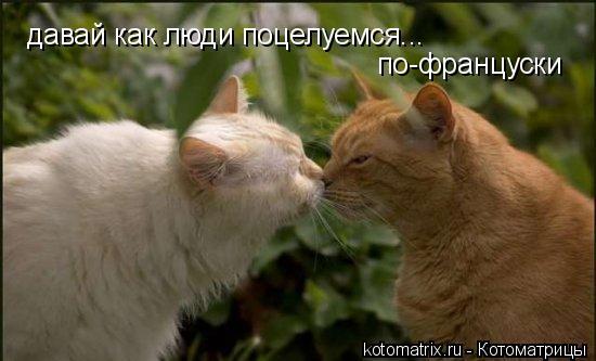 Котоматрица: давай как люди поцелуемся... по-француски