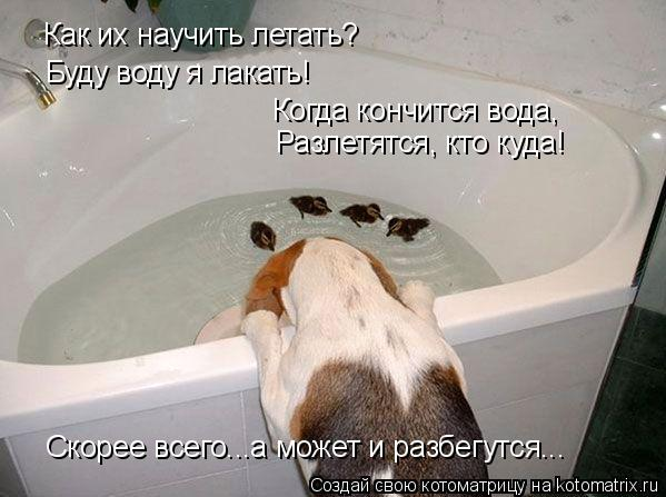 Котоматрица: Как их научить летать? Буду воду я лакать! Когда кончится вода, Разлетятся, кто куда! Скорее всего...а может и разбегутся...