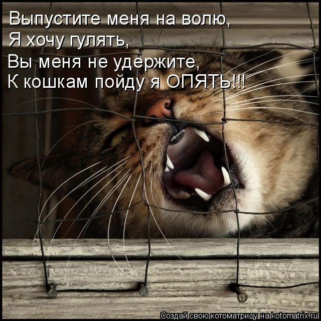 Котоматрица: Выпустите меня на волю, Я хочу гулять, Вы меня не удержите, К кошкам пойду я ОПЯТЬ!!!