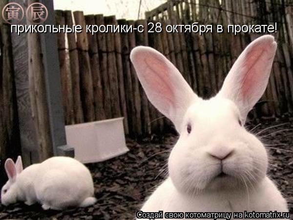 Котоматрица: прикольные кролики-с 28 октября в прокате!