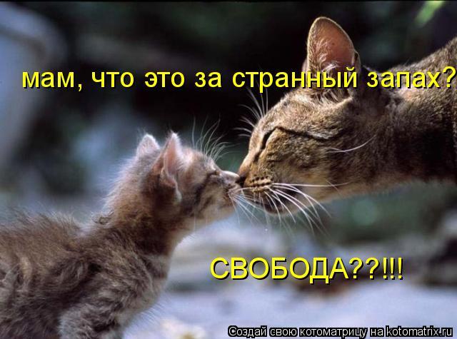 Котоматрица: мам, что это за странный запах? СВОБОДА??!!!