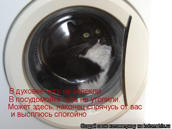 Котоматрица: В духовке чуть не запекли, В посудомойке чуть не утопили. Может здесь, наконец спрячусь от вас  и высплюсь спокойно