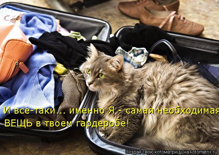 Котоматрица: И все-таки... именно Я - самая необходимая  ВЕЩЬ в твоем гардеробе!