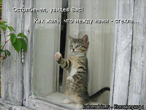 Котоматрица: Остолбенел, увидев Вас!  Как жаль, что между нами - стекла...