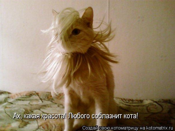 Котоматрица: Ах, какая красота! Любого соблазнит кота!