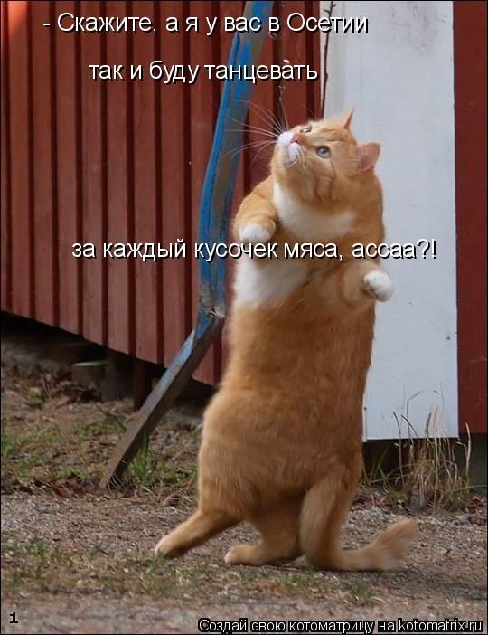 Котоматрица: - Скажите, а я у вас в Осетии  так и буду танцевать  за каждый кусочек мяса, ассаа?!