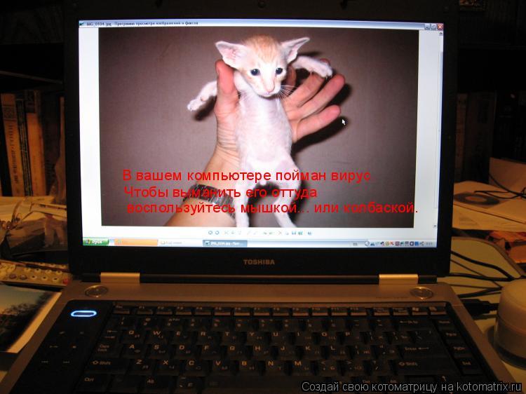 Котоматрица: В вашем компьютере пойман вирус. Чтобы выманить его оттуда  воспользуйтесь мышкой... или колбаской.