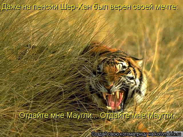 Котоматрица: Даже на пенсии Шер-Хан был верен своей мечте: Отдайте мне Маугли... Отдайте мне Маугли...
