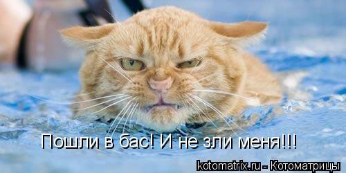 Котоматрица: Пошли в бас! И не зли меня!!!