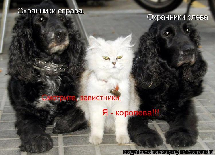 Котоматрица: Смотрите, завистники,  Я - королева!!! Охранники слева Охранники справа,