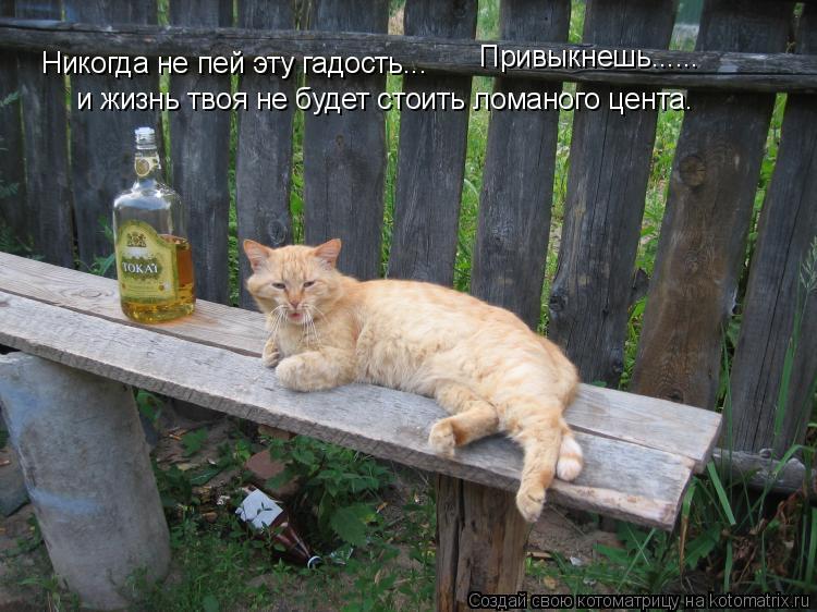 Котоматрица: Никогда не пей эту гадость...  Привыкнешь...... и жизнь твоя не будет стоить ломаного цента.