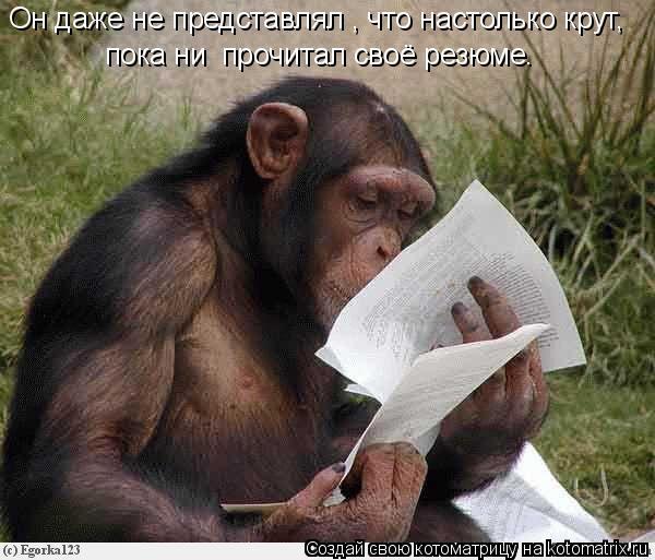 Котоматрица: Он даже не представлял , что настолько крут, пока ни  прочитал своё резюме.