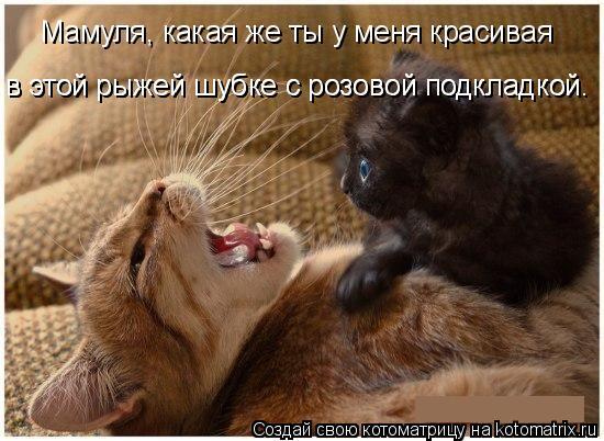 Котоматрица: Мамуля, какая же ты у меня красивая в этой рыжей шубке с малиновой подкладкой. Мамуля, какая же ты у меня красивая в этой рыжей шубке с малино