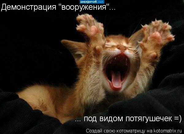 """Котоматрица: Демонстрация """"вооружения""""... ... под видом потягушечек =)"""