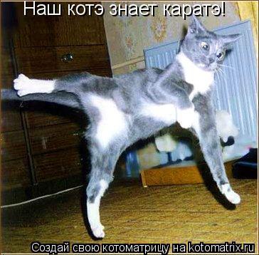 Котоматрица: Наш котэ знает каратэ!