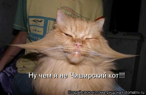 Котоматрица: Ну чем я не Чиширский кот!!!