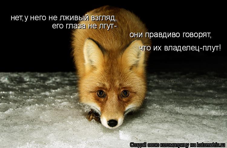 Котоматрица: нет,у него не лживый взгляд, его глаза не лгут- они правдиво говорят, они правдиво говорят, что их владелец-плут!