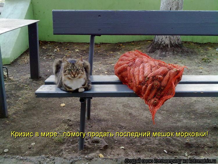 Котоматрица: Кризис в мире...помогу продать последний мешок морковки!