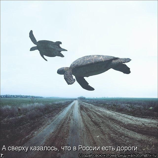 Котоматрица: А сверху казалось, что в России есть дороги