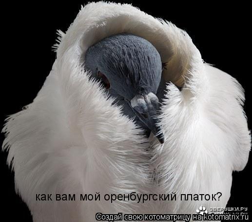 Котоматрица: как вам мой оренбургский платок?