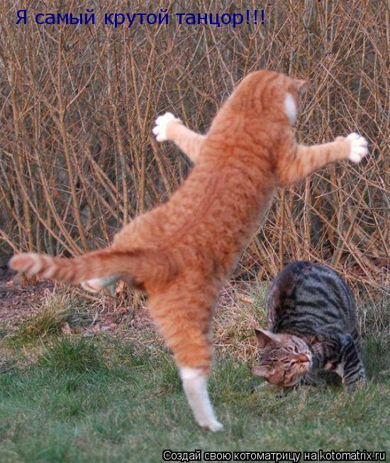 Котоматрица: Я самый крутой танцор!!!
