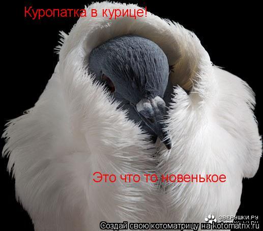 Котоматрица: Куропатка в курице! Это что то новенькое