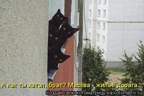 Котоматрица: А как ты хатэл, брат? Масква - жильё дорага...