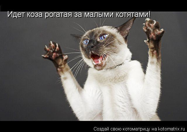 Котоматрица: Идет коза рогатая за малыми котятами!