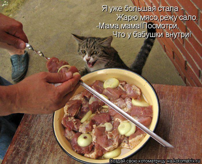 Котоматрица: Я уже большая стала -  Жарю мясо,режу сало. -Мама,мама!Посмотри, Что у бабушки внутри!