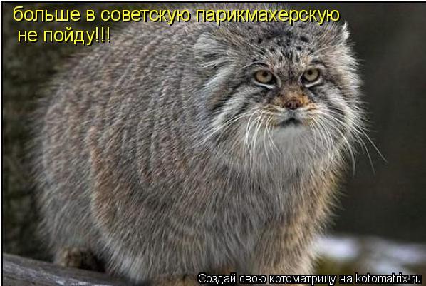 Котоматрица: больше в советскую парикмахерскую  не пойду!!!
