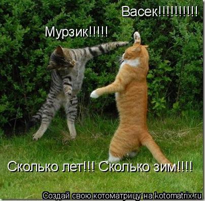 Котоматрица: Васек!!!!!!!!!! Мурзик!!!!! Сколько лет!!! Сколько зим!!!!