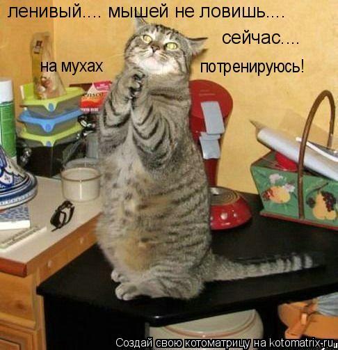 Котоматрица: ленивый.... мышей не ловишь.... сейчас.... на мухах потренируюсь!