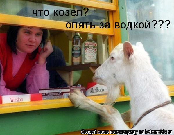 Котоматрица: что козел? опять за водкой???