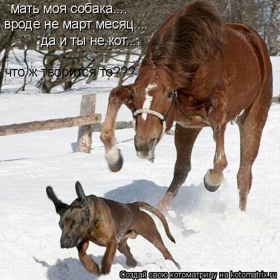 Котоматрица: мать моя собака.... вроде не март месяц.... да и ты не кот.... что ж творится то???
