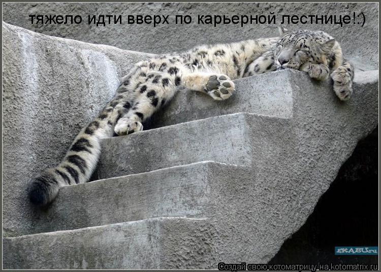 Котоматрица: тяжело идти вверх по карьерной лестнице!:)