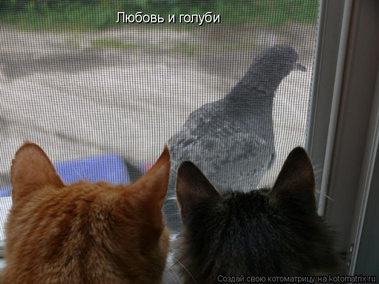 Котоматрица: Любовь и голуби