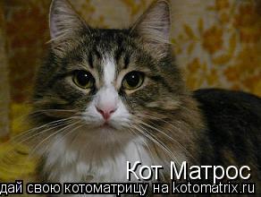 Котоматрица: Кот Матрос