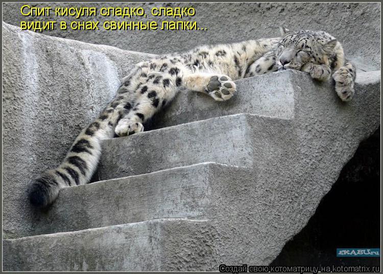 Котоматрица: Спит кисуля сладко, сладко видит в снах свинные лапки...