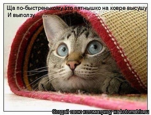 Котоматрица: Ща по-быстренькому это пятнышко на ковре высушу И выползу........