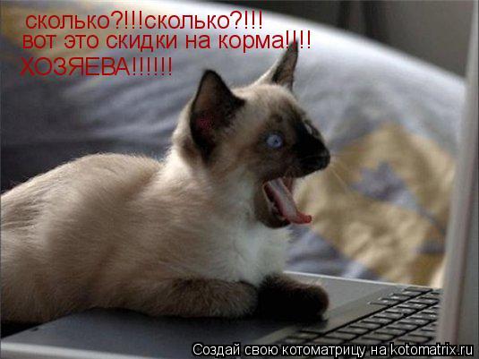 Котоматрица: сколько?!!!сколько?!!! вот это скидки на корма!!!! ХОЗЯЕВА!!!!!!