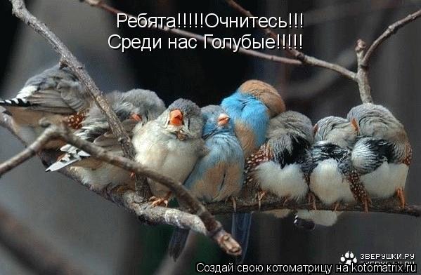 Котоматрица: Ребята!!!!!Очнитесь!!! Среди нас Голубые!!!!!