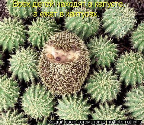 Котоматрица: Всех детей находят в капусте, а ежат в кактусах.