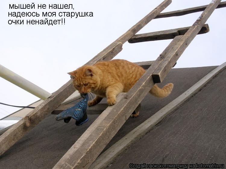 Котоматрица: мышей не нашел,  надеюсь моя старушка очки ненайдет!!