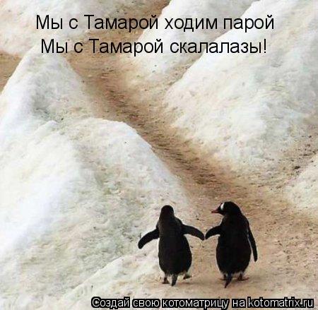 Котоматрица: Мы с Тамарой ходим парой Мы с Тамарой скалалазы!