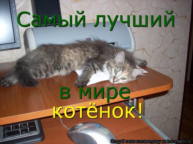 Котоматрица: Самый лучший в мире котёнок!