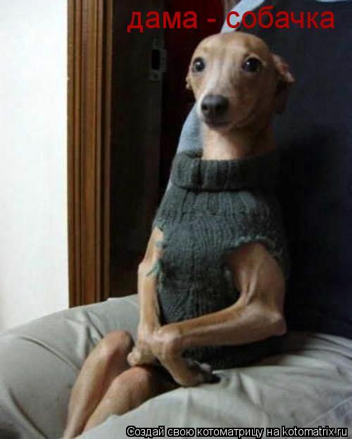 Котоматрица: дама - собачка